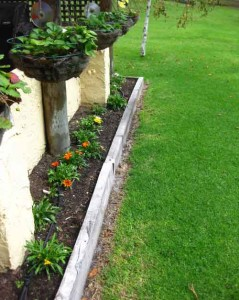 A photo showing a garden bed along side a verandah wall. Small plants with flowers are in the garden bed.